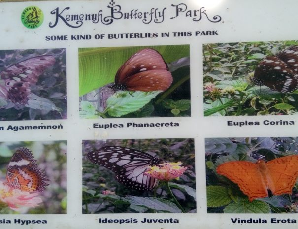 Kemenuh_butterfly_park
