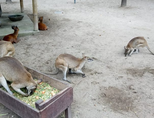 bali_zoo_animals