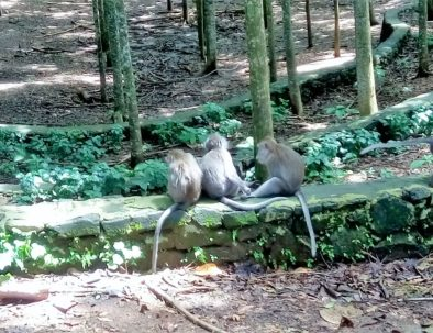monkey_forest_ubud_1