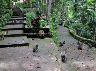 monkey_forest_ubud_3