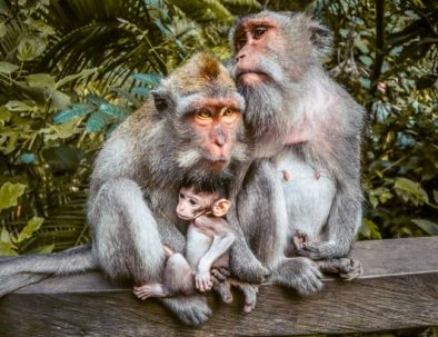 monkey_forest_ubud_4